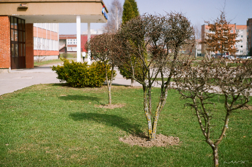 Pentax KM + SMC M 50mm f/2